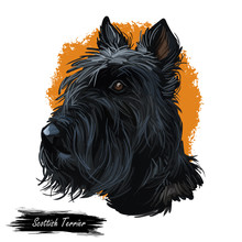 Scottish Terrier Domestic Animal Originated From Britain Scolnad Doggy Digital Art Illustration . Doggy Hand Drawn Clip Art Watercolor Portrait. British Purebred With Long Coat Fur Furry Canine Hound.