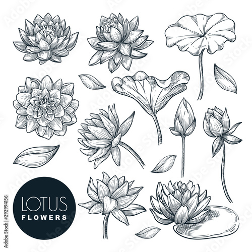 Lotus beautiful blooming flowers and leaves set, isolated on white background Wallpaper Mural