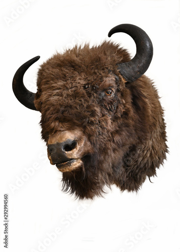 Papel de parede European bison head trophy