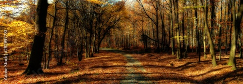 Broad leaf trees forest/woodland with gravel road at autumn afternoon daylight Slika na platnu