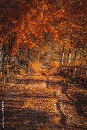 Recess Fitting Road in forest Bonito caminho na floresta no Outono
