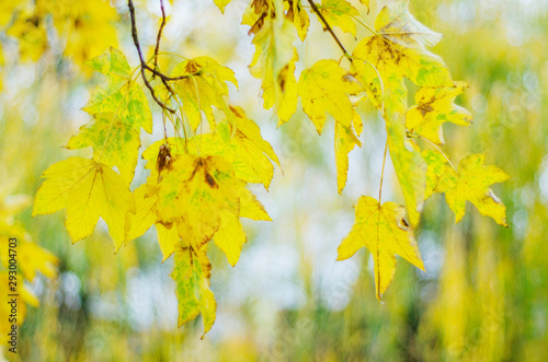 Foto auf Gartenposter Baume colorful leaves in beautiful autumn season in the park