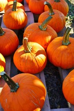 Display Of Round Orange Pumpkins At The Farmers Market In The Fall
