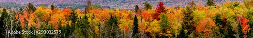 fall foliage Wallpaper Mural