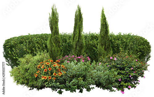 Flower hedge isolated on a white background Fototapet