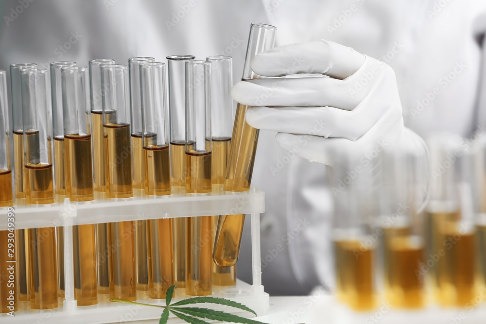 Fototapeta Doctor taking test tube with urine sample for hemp analysis, closeup