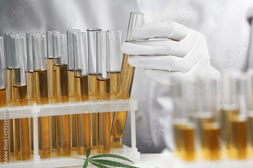 Doctor taking test tube with urine sample for hemp analysis, closeup
