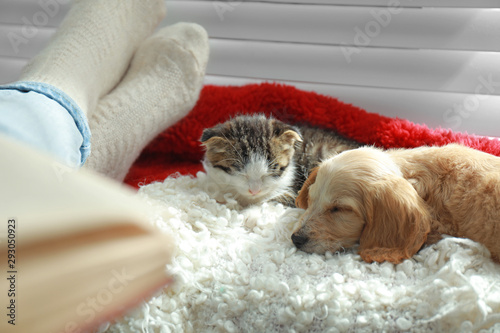 Obraz Owner with adorable little kitten and puppy on plaid indoors, closeup - fototapety do salonu