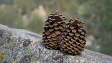 Two Pine Cones Sitting On A Rock
