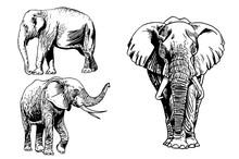Graphical Set Of Elephants Iso...