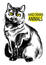 British Cat. Cat Sits Having Lifted A Paw. Vector Freehand Drawing.