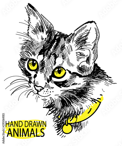 Wall Murals Hand drawn Sketch of animals cat head freehand drawing in vintage style. Cute kitten wearing a collar.