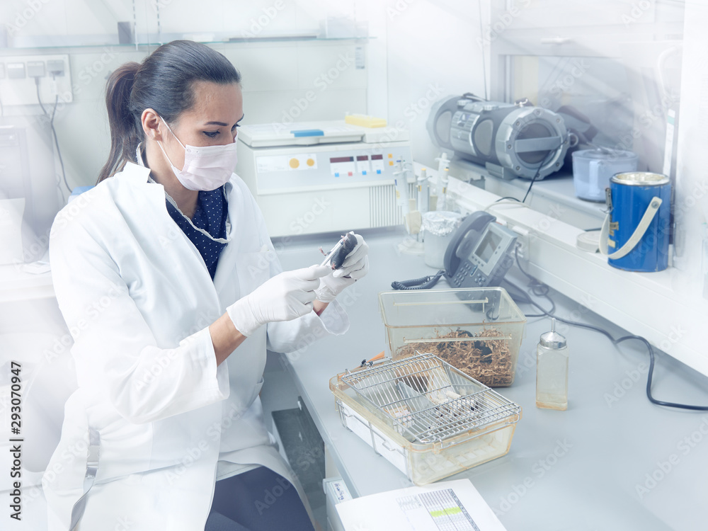 Fototapeta Female scientist performs animal testing in modern laboratory, academic research or industrial facility