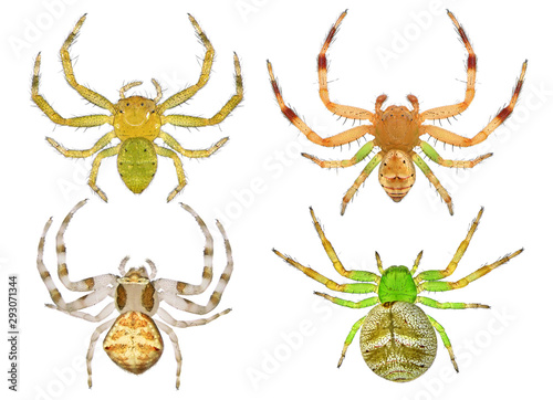 Spiders. Close up. Isolated on a white background Canvas Print