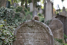 Jewish Cemetery, Unesco Monument, Trebic, Memorial, Tradition, Culture.