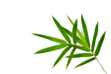 Fresh Green Bamboo Leaves Isol...