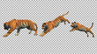 Bengal tiger pose jump animation with pose to pose by 3d rendering include work path for alpha.