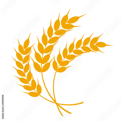 Wheat or barley ears Obraz na płótnie