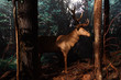Muzeum przyrodnicze w Białowieży