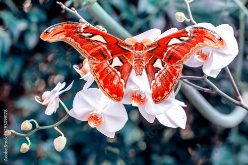 Canvas Prints Butterfly Closeup beautiful butterfly in a summer garden