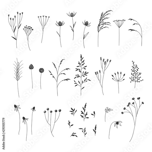 Hand drawn autumn floral illustrations collection on white background