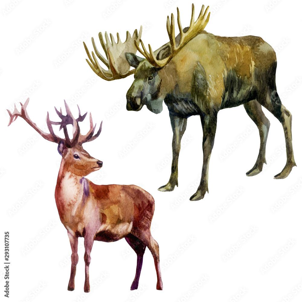 Watercolor illustration, set. Forest animals. Elk and deer. <span>plik: #293107735 | autor: Margosoleil</span>