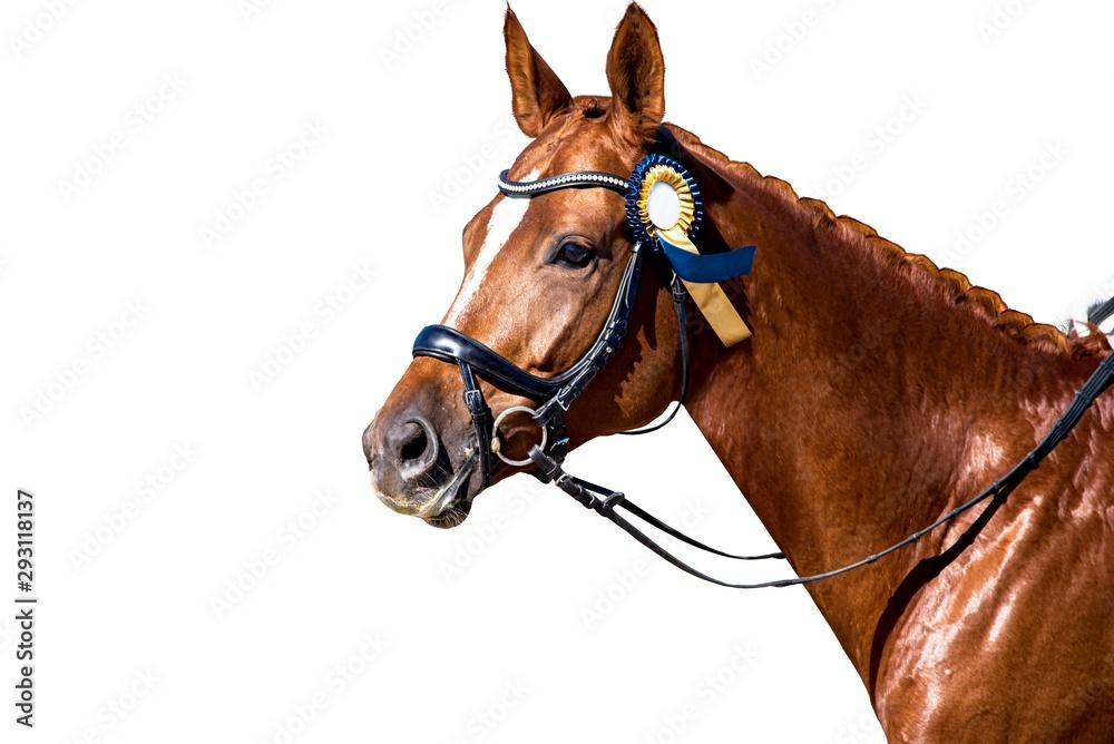 Fototapeta Horse Portrait . Arab racer . on a white background.Champion horses