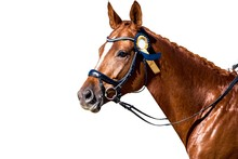Horse Portrait . Arab Racer . On A White Background.Champion Horses