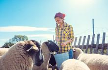 Bäuerin Füttert Die Schafe Auf Dem Bauernhof