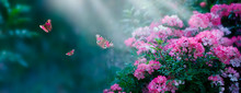 Mysterious Fairytale Spring Or...