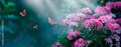 Mysterious fairytale spring or summer fantasy floral wide banner with rose flowers blossom, flying peacock eye butterflies on blurred beautiful background toned in bright colors and shining sun beam