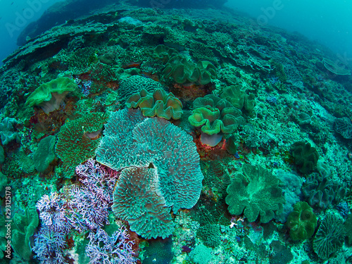 Foto op Plexiglas Koraalriffen coral reef