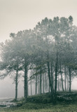 trees in fog in forest  - 293137710