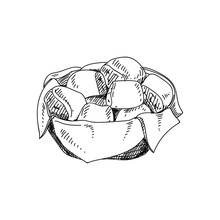 Dinner Rolls Hand Drawn Vector...