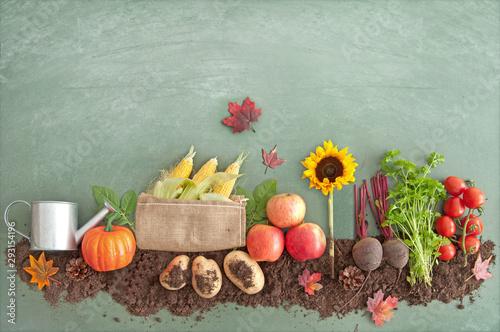 Autumn organic food produce - 293154196