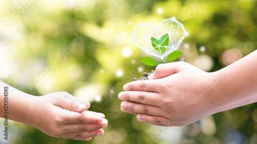 Fotografía  Hands  planted seedlings is protected by the heart, loving the environment and protecting nature Nourishing the plants World Environment Day To help the world look beautiful