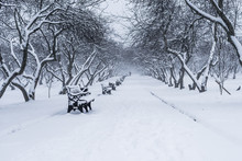 Winter Park Landscape - Path Between Trees With Benches