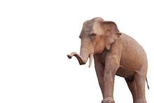 Stone Elephant That Separates Asia From The Big Faithful Background