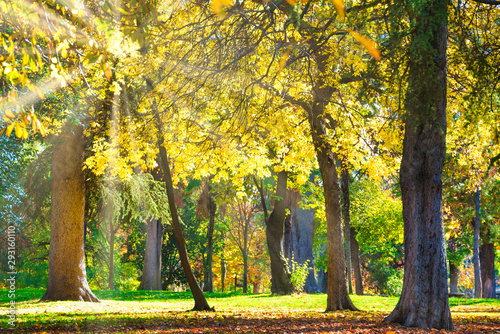 Poster Jaune Autumn park with yellow chestnut trees at bright sunny day