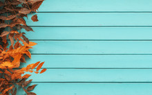 Blue Aquamarine Wooden Background With Ivy Tree - Painted Old Wood Facade With Climbing Orange Ivy Plant - Vintage House Front With Weathered Fence And Autumn Foliage. Copy Space
