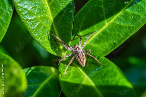 mały pająk na zielonym liściu - 293170507