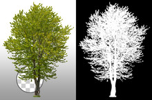 Green Tree Isolated On Transpa...