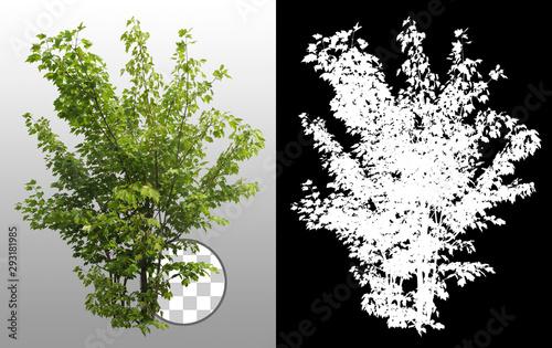 Fotografia Green shrub