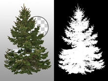 Snow Covered Fir Tree In Winte...