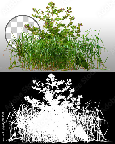 Obraz na plátne Mix of grass and wild plants isolated on transparent background via an alpha channel of great precision