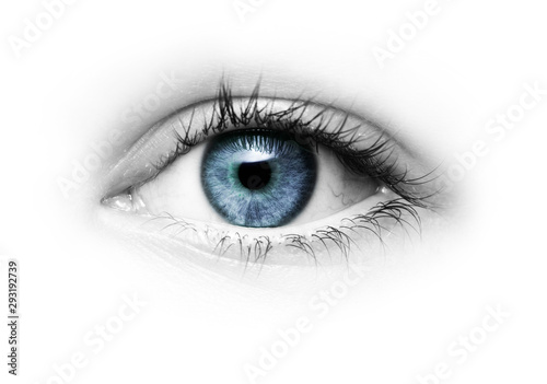 Leinwand Poster Auge mit Grüner Pupille freigestellt auf Weißem hintergrund