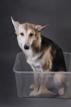 Cute Mongrel Dog Sitting In Tr...