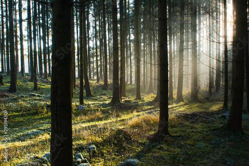 Herbstwald im Morgennebel
