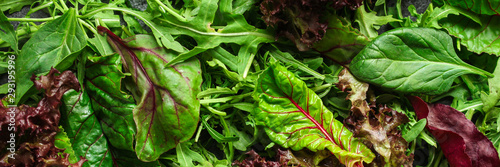 Obraz Healthy salad, leaves mix salad (mix micro greens, juicy snack). food background. copy space. Top view - fototapety do salonu