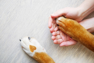 Dog paws with a spot in the...